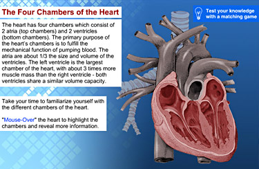 Kt 3d kyle thornthwaite e learning portfolio interactive exercise learning the human heart ccuart Choice Image